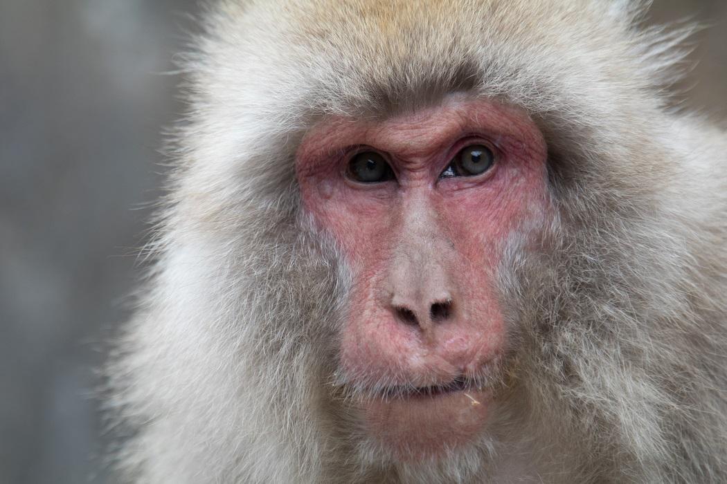 Before-Ape