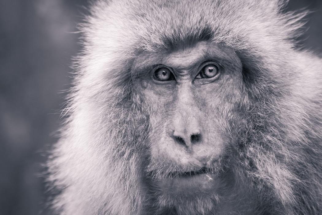 After-Ape