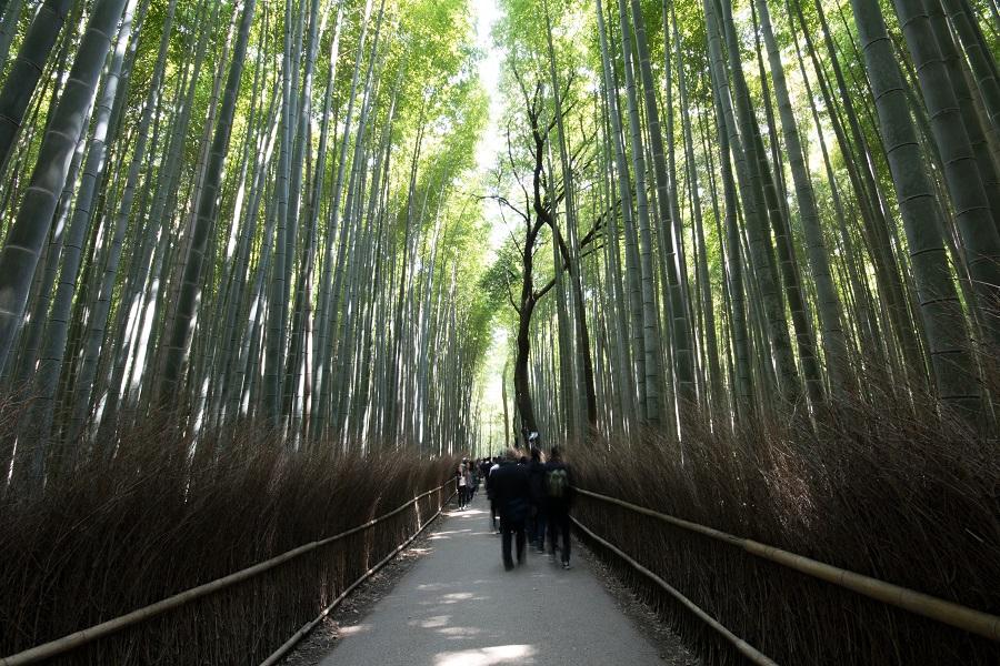 Before-Junho Bambu
