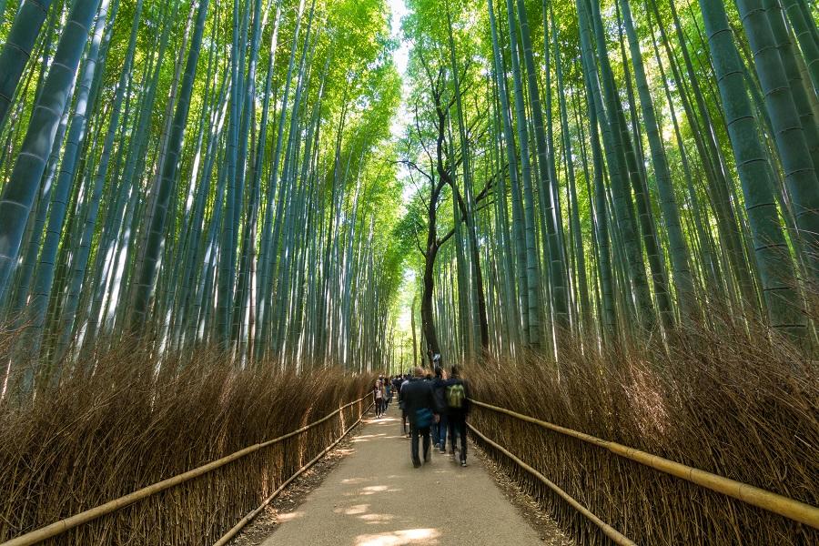 After-Junho Bambu