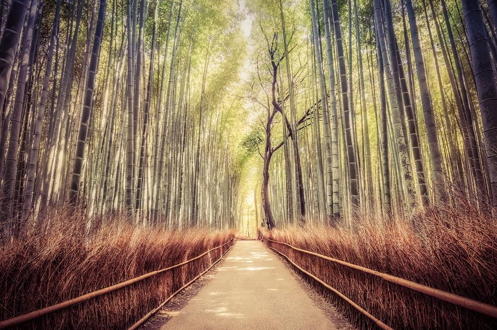 After-Bamboo Julho